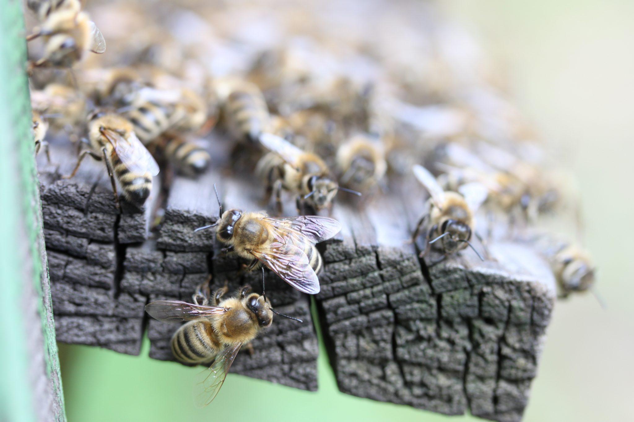 Naše včielky