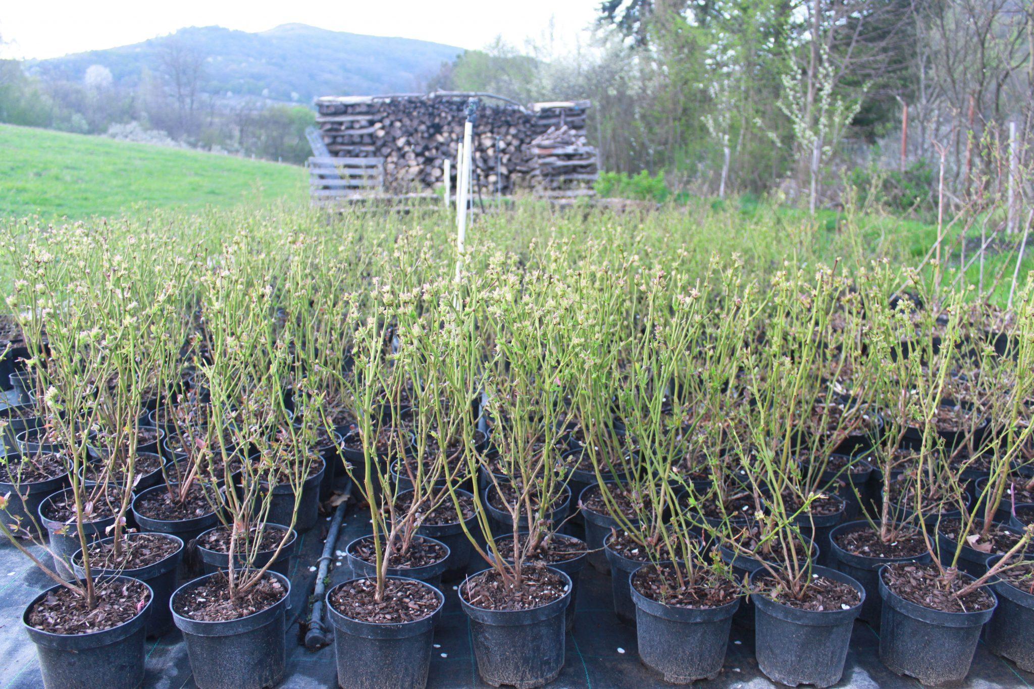 Jarné sadenice na predaj